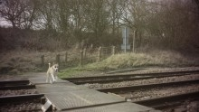 Keep your dog on a lead or you're on dangerous ground, urges new level crossing campaign