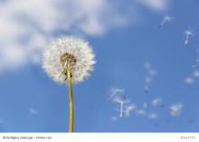 Dagens halter av pollen