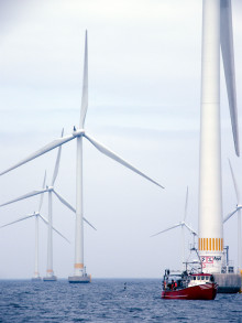 Havsbaserad vindkraft påverkar fiskars beteende