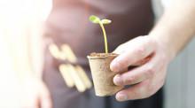 Vad växer med växa-stödet?