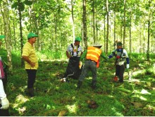 "Life Forestry Costa Rica: FSC Audits 2015 mit Bestnote und ""Special Guests"""