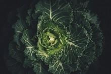 Tidernas satsning på hållbar mat