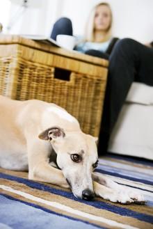 Vilket ansvar har du för ditt husdjur?