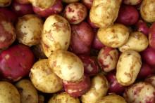 Det visste du (kanske) inte om potatis