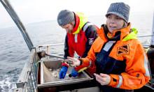 Marinbiologernas råd – så kan du hjälpa livet i havet