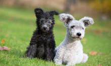 Vanliga frågor – hunduppfödare