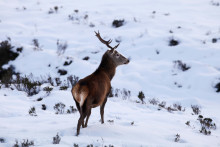 Follow in the Footsteps of BBC Two's Highlands: Scotland's Wild Heart