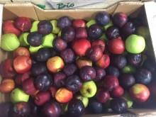 S-udspil om madspild: FødevareBanken – der skal mere til
