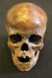 Menneskekranium fra Falster er danefæ