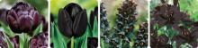 Höstlök i fyra nyanser av svart