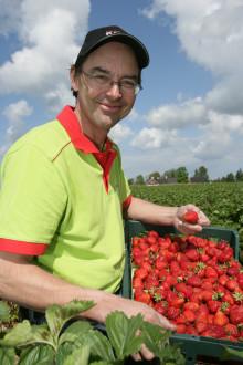 Fira nationaldagen med de första klimatcertifierade jordgubbarna.