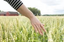 Produktutveckling och högre betalningsvilja krävs för tillväxt i livsmedelskedjan