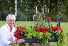Sommarens favoritplantering - framröstad