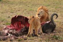 Tidiga människan formade Afrikas djurliv