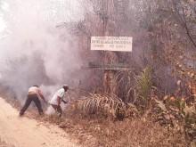 Efterspørgslen efter soja har været med til at sætte ild til de tropiske skove