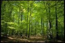Seminarium om skog och vilt med landsbygdsministern och Jägareförbundet