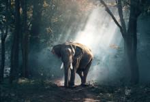 Elefanter planter træer og former skoven