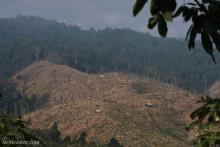 """""""Økologisk recession"""": Tab af biodiversitet i kritisk tilbagegang på halvdelen af landjorden, siger forskere"""