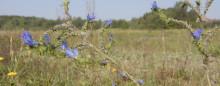 Inbjudan: Kaninlandet - Lunds nya naturreservat