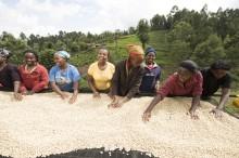 Ekologiskt kaffe är bra men inte tillräckligt
