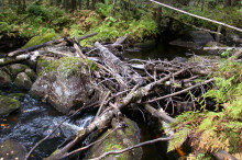 Sveriges 4000:e naturreservat finns i Värmland