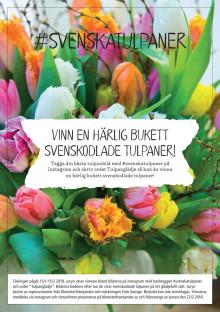 Instagramtävling svenska tulpaner 2018