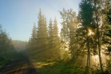 Statskogs årsrapport 2015:  Omfattende utredning og videre profesjonalisering