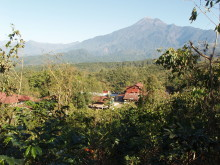 Rainforest Alliance stärker kaffeodlares kamp mot klimatförändringar