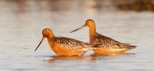 Stabilt klimat ger fler fågelarter