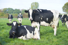 ​Arla Foods UK comments on EFRA Committee farmgate prices report