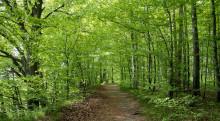 Hög tid att se över skogshägnen