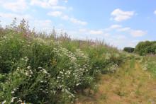"Kick-off des Kooperationsprojekt ""Bunte Biomasse"""