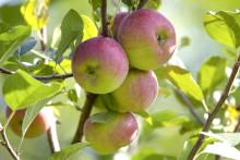 Hösten är bästa tiden att plantera - nu inleds Stora Planteringsveckan