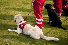 Djurens roll i det civila försvaret