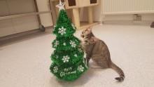 Glædelig jul fra Kattens Værn!