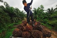 Mondelēz International presenterar handlingsplan för hållbar palmolja