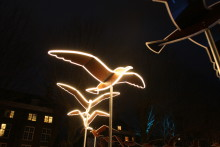 Birds Fly Around with You till Norrköping Light Festival!