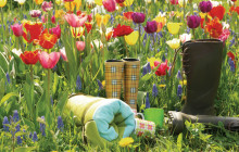 Maxa våren – mer än måttfullhet i sikte för höstens blomsterlök