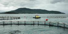 KRAV får grönt ljus i WWF:s Fiskguide för hållbara val