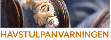 Havstulpanvarning utlyst för Stockholm, Södermanland, Gotland och Ålands län
