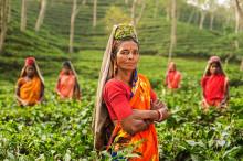Färgsprakande Indien – en rundresa genom den gyllene triangeln
