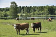 Atrian tytäryhtiö A-Tuottajat mukana luontoa säästävässä, uraauurtavassa SYSTEMIC-konsortiossa