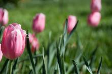 Dags att plantera vårblommorna