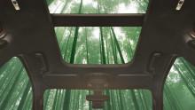Bambus – ein superstarker und schnell nachwachsender Werkstoff ist potenzieller Bestandteil künftiger Ford-Fahrzeuge