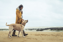 Simplyhealth Professionals launches low cost Accidental Injury Cover for pets