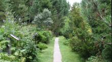 Seminarium: Nytt bokprojekt om svensk trädgårdshistoria