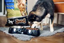 Høstens nyhet - premiumfôr til hund og katt