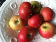 Svenska äpplen i skörd