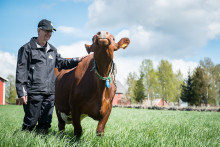 Smultronställe - Gäsene Mejeri i Ljung