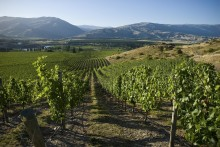 Nyhet från Nya Zeeland - ny vinmakare